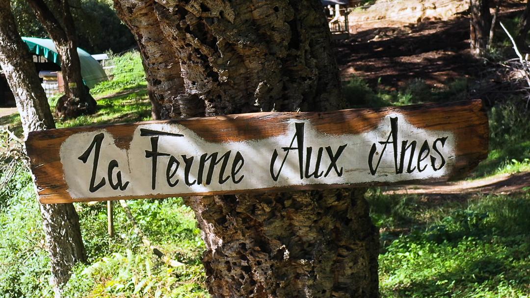 Read more about the article Nettoyage de plage avec «La Ferme aux Ânes»